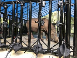 A rhinoceros in a cage surrounded by high-tech cameras